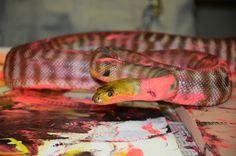 Oklahoma Zoo Transforms Their Animals into Artists