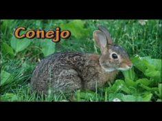 ✰ Aprender español ☛ Los animales ☚ Vocabulario ✰