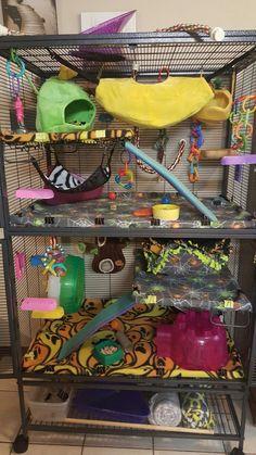 Colorful rat cage Chinchilla Cage, Ferret Cage, Pet Ferret, Pet Rats, Cage Rat, Pet Rat Cages, Cute Ferrets, Chinchillas, Hamsters