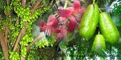 Medicinal Plants and Their Uses: Medicinal Plants and Their Uses │ Strafruit Vegeta...