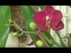 Prawidłowa pielęgnacja storczyków - film poradnikowy - YouTube Orchid Care, Stranger Things, Orchids, Badge, Invitations, Film, Plants, Christmas, Youtube