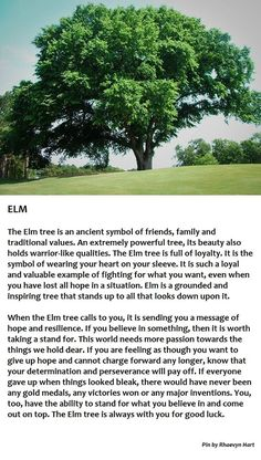 Elm Tree Chelsea (With images) Trees And Shrubs, Trees To Plant, Mother Earth, Mother Nature, Elm Tree, Tree Identification, Celtic Tree, Magick, Wiccan