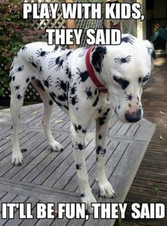 Funny Animal Memes Of The Day – 52 Pics – Lovely Animals World Memes de animales divertidos del día – 52 fotos – Lovely Animals World Funny Animal Jokes, Funny Dog Memes, Cute Funny Animals, Funny Animal Pictures, Animal Memes, Cute Baby Animals, Funny Dogs, Funniest Animals, Cute Animal Humor