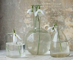 Spring / snow drops / Clive Nichols Garden Photography / green home