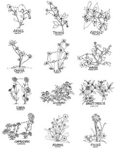 Zodiac Constellations with Flowers
