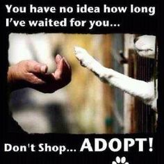 There is an animal at the animal shelter waiting for you to take him home where he will give you unconditional love.