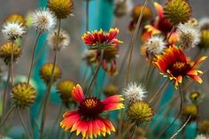 Blumen, Garten, Bunt, Zaun