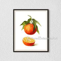 Citrus art, Illustration, Orange print, Antique botanical art, Kitchen printables, Citrus print vintage, Printable art, Digital print, #25.