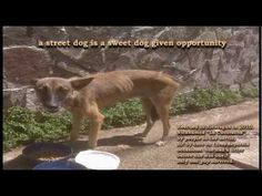 Sweet Dog Video by Evan Bliss