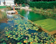 Natural pool, pond idea though