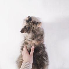 🐈🎀 #cat #catstagram #photo #vcso #vscocam #white #minimal #blogger