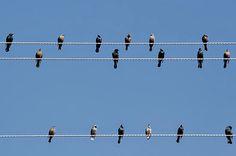 Elektrik tellerine konan kuşlar neden çarpılmıyorlar CEVAPNE den öğrenin ! http://cevapne.net/elektrik-tellerine-konan-kuslar-neden-carpilmiyorlar/