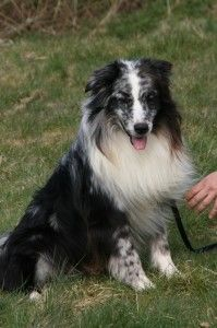 Oreo Aussies are my absolute favorite :)