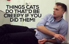 Things Cats Do That'd Be Creepy If You Did Them: (like meeting new people)->>Heheh. I lika dis.