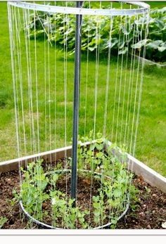 Sugar snap pea growing device......anyone know how to actually make this? Someone emailed me this picture.