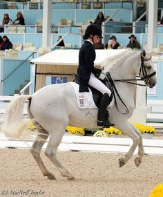 canter pirouette So beautiful the horse reminds me of one of my favourite ponies at my riding school