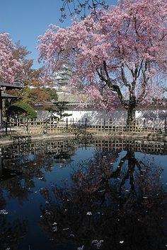 Cherry tree in full bloom in Himeji Castle, Hyogo-ken, Japan Places Around The World, The Places Youll Go, Places To See, What A Wonderful World, Wonderful Places, Beautiful Places, Himeji Castle, Kobe Japan, Japanese Castle