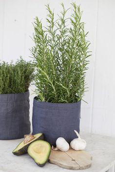 Mester grønn grow in potte