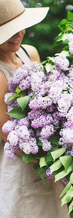 Purple Flowers, Wild Flowers, Beautiful Gardens, Beautiful Flowers, Early Spring Flowers, Spring Song, Lilac Blossom, Welcome Spring, Hollyhock