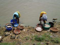 Sorting and washing the fish at Lake Victoria, Kenya