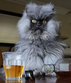 """Colonel Meow the cat poses with a glass of scotch in celebration of National Scotch Day."""