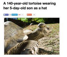 Lovely Hat http://ift.tt/2mklurH #lol #funny #rofl #memes #lmao #hilarious #cute
