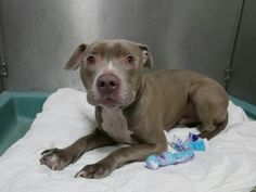 """""""JETER""""- TO BE DESTROYED TODAY BY NYC ACC -SUNDAY -1/8/17- AVAILABLE AT BROOKLYN ACC -#A1100606- urgentpodr.org."""