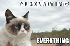 Grumpy Cat is my spirit animal.