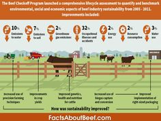 Beef sustainability- Environmental, Economic & Social