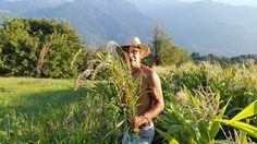 Miglio di montagna proveniente da Sortenganten nel vallese coltivato da Raetia Biodiversità Alpine a Teglio (SO)