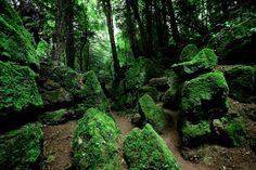 Puzzlewood, Gloucestershire, England