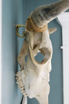 How to hang a Cow Skull