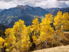 'Baldy Peak Aspens' - Golden aspens high up on Baldy Peak, looking towards the Ouray valley, Sep. 2008. North of Ouray, Colorado, USA. -- Photo © copyright by Jack Brauer, Mountain Photographer