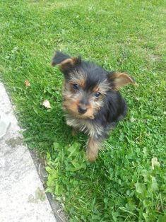 Dogs, Cute, Animals, Animales, Animaux, Doggies, Kawaii, Animal, Animais