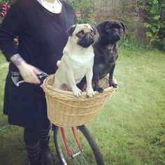 """bobdoom:  """"Put all of your ham in this basket. All of your cheese too… how about some turkey too?""""(jublove)"""