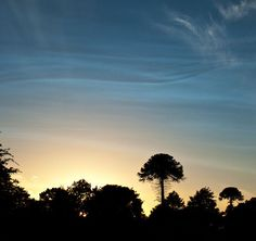Noctilucent clouds over Newton Linford, Leicester, UK. Beautiful!