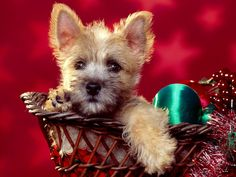 christmas dog | free animals holiday red desktop wallpaper christmas puppy uploaded by ...