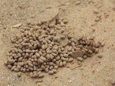 sand, landscape, photography
