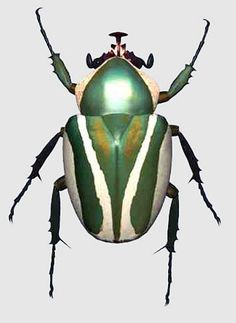 The scarab beetle is a good omen. I noticed it in the sand after I fell to my knees weeping over the sight of the pyramids.