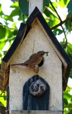 Sweet Birdhouse!