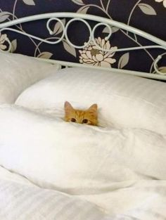 PetsLady's Pick: Funny Cold Cat Of The Day...see more at PetsLady.com -The FUN site for Animal Lovers