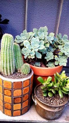 Cool cactus pot. Love the mix...