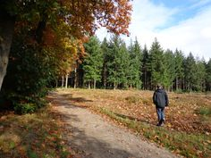 Woods, Wageningen