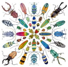 Google Image Result for http://www.countyofnapa.org/uploadedImages/Global_Image_Library/Categories/Library/2012-2013_Art_in_the_Library/Beautiful%2520Beetles%2520by%2520Lucy%2520Arnold.jpg