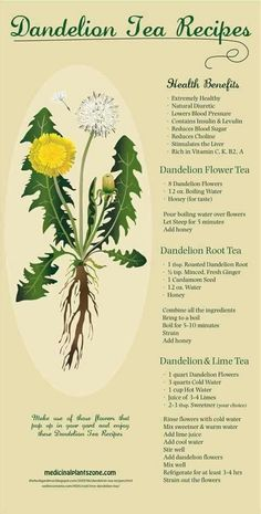 Delicious Dandelion Tea Recipes: Be sure that you source Organic or Wild Crafted. - Delicious Dandelion Tea Recipes: Be sure that you source Organic or Wild Crafted Herbs that aren& - Healing Herbs, Medicinal Plants, Natural Healing, Holistic Healing, Natural Oil, Holistic Wellness, Herbal Remedies, Home Remedies, Natural Remedies