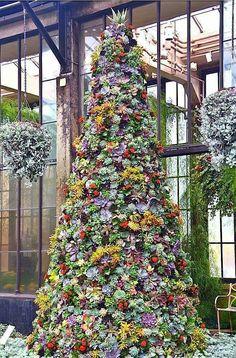 A succulent tree at Longwood Gardens, PA Xmas Tree, Christmas Tree Decorations, Natal Natural, Succulent Tree, Succulent Display, Succulent Landscaping, Longwood Gardens, Beautiful Christmas Trees, Hardy Plants