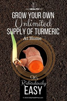 How to Grow Your Own Unlimited Supply of Turmeric At Home. It's Ridiculously Easy! via @dailyhealthpost