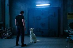 The DC Universe has released new photos from this week's installment of Titans, offering a first look at Conner Kent (Joshua Orpin) and Krypto, and it looks like they might be in some serious trouble. Dc Comics, Comics Love, Teen Titans, Dc Universe, Superboy Young Justice, Titans Tv Series, Greg Walker, Doctor Light, Ryan Potter