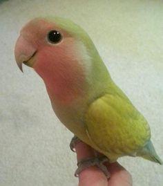 270 Beautiful Birds Ideas Beautiful Birds Birds Pet Birds