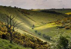 David Hockney and the Yorkshire Wolds - On Landscape